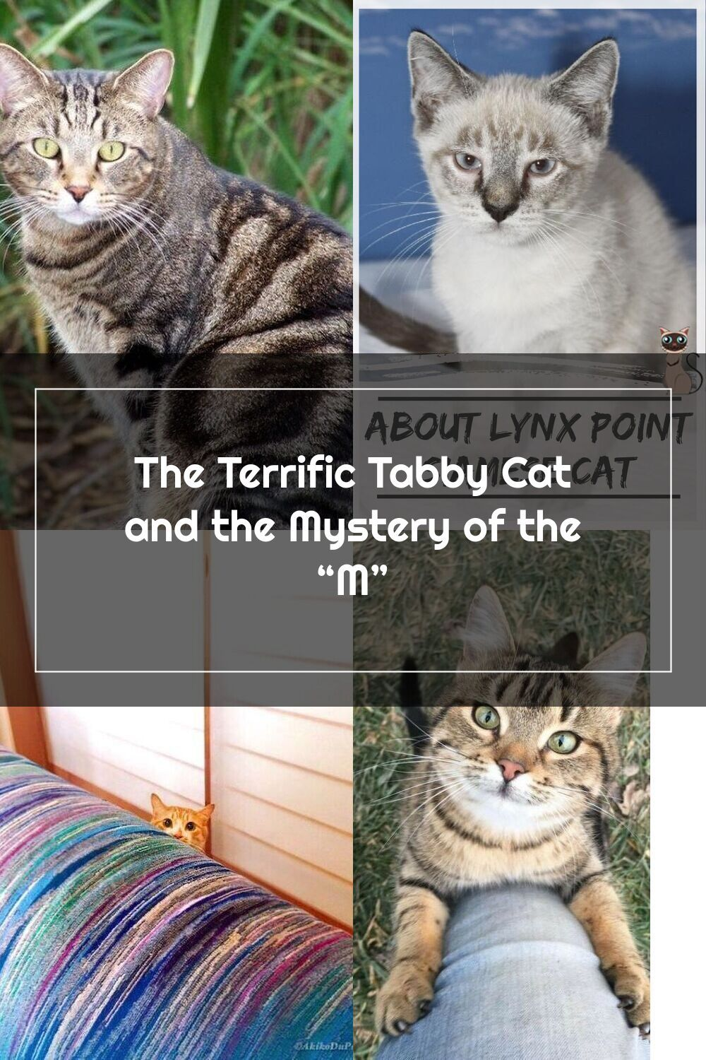Did you know that there are four different types of tabby