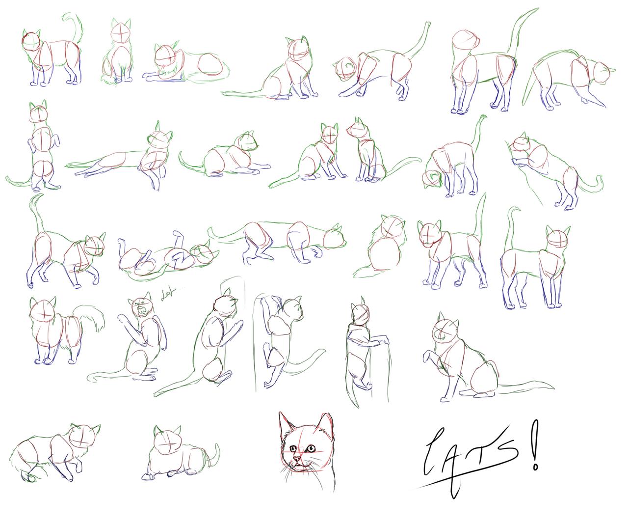 simple cat drawing - Google zoeken
