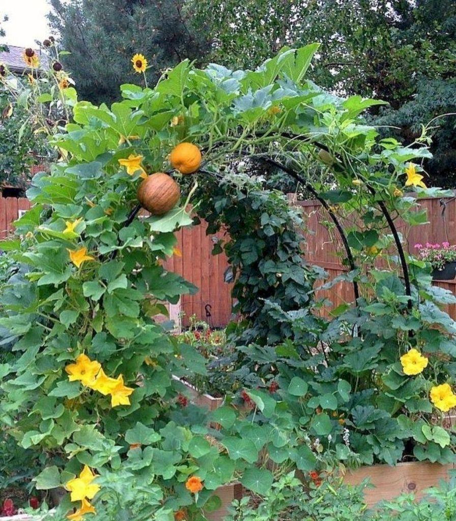 5 Vertical Vegetable Garden Ideas For Beginners: 45 Affordable DIY Design Ideas For A Vegetable Garden In