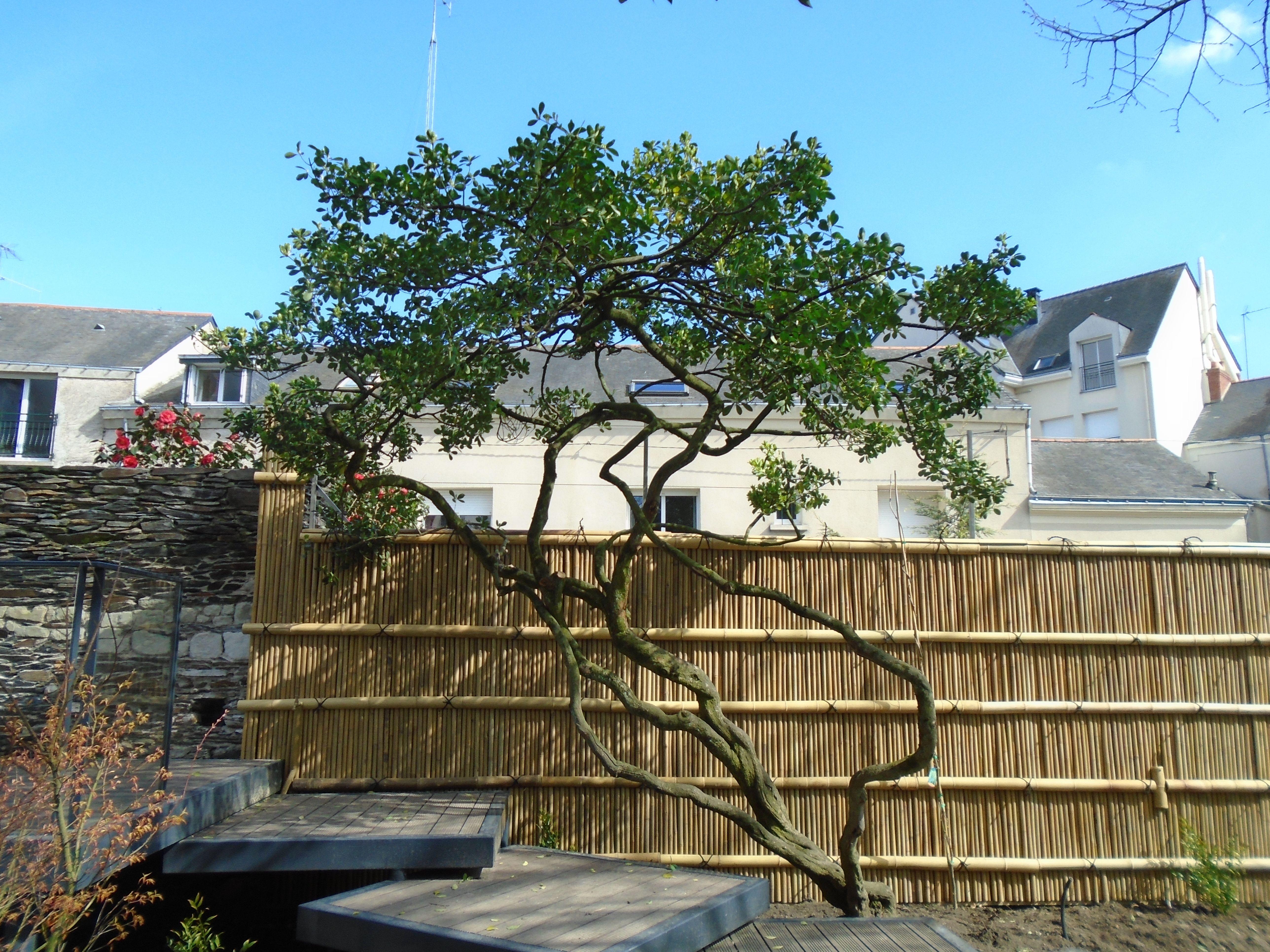 Palissade en bambou pour les jardins japonais ou ...