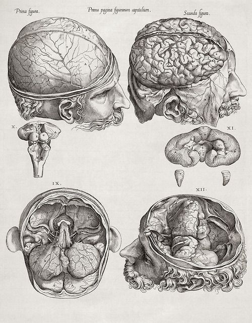 Image Result For Brain Anatomy Drawing Spooktacular Pinterest