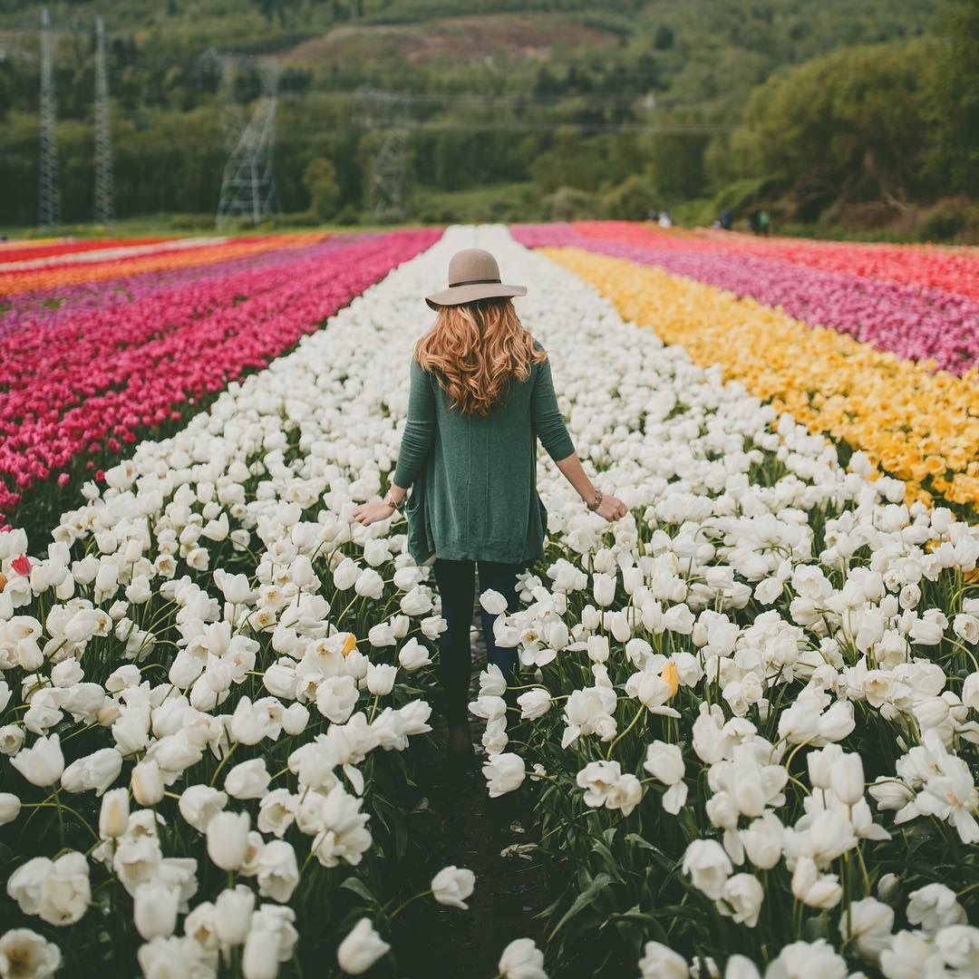 Marvelous Unknown Tulip Festival Tulip Fields Nature