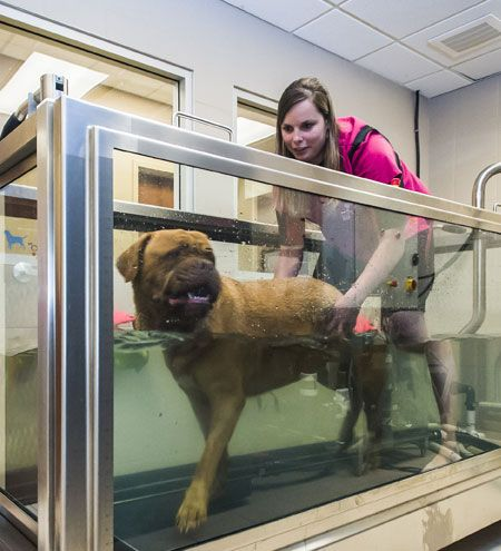 ACCREDITED COLLEGES OF VETERINARY MEDICINE - …