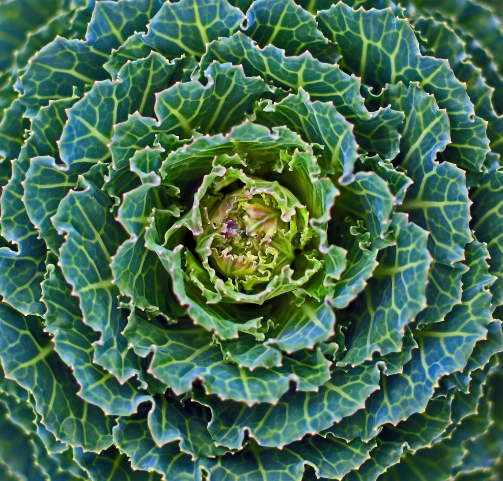 This Type Of Radial Symmetry Is Everywhere In Nature