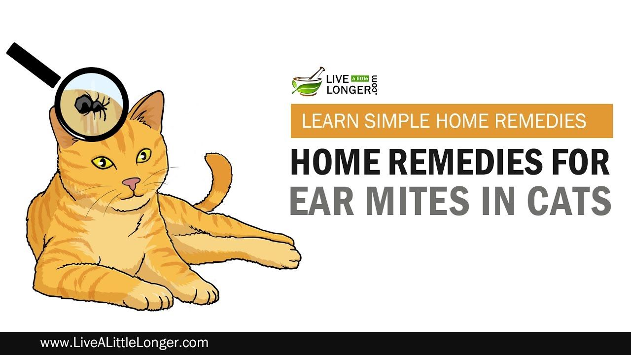Best Home Remedies For Ear Mites In Cats Cat Care Home Remedies Cats