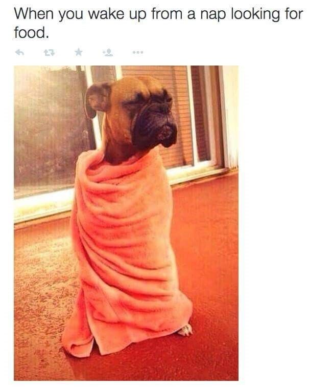 15 Animal Memes That Are a Little Too Real for Us