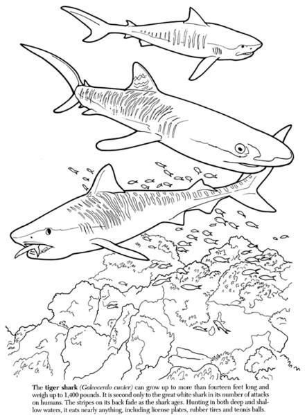 Nature Tiger Sharks Image By Tharens Photobucket Shark Images Adult Coloring Nature
