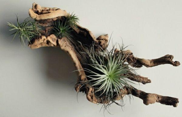 Pflanzgefäße Selber Machen rustikaler pflanzgefäss selber machen baumstamm kakteen terrarium