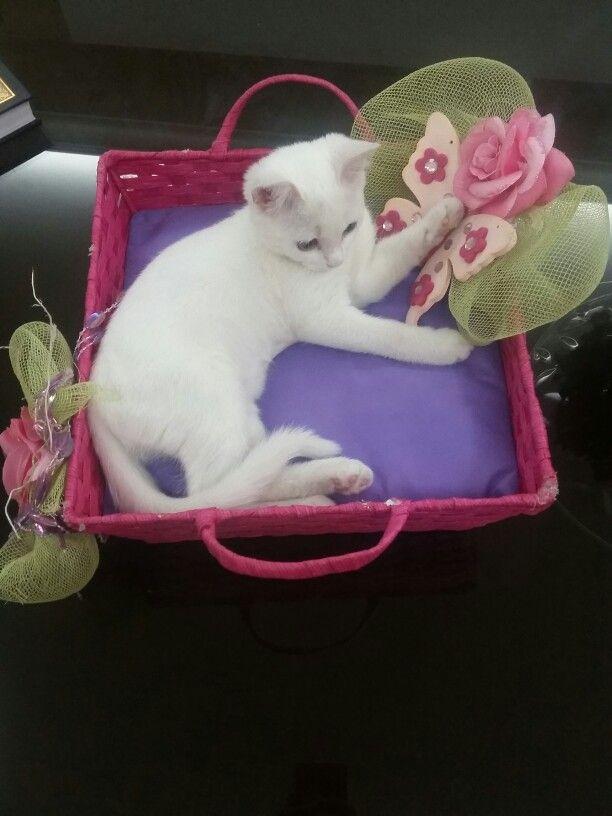 Ur so cutee!! My little Poufi♡♡