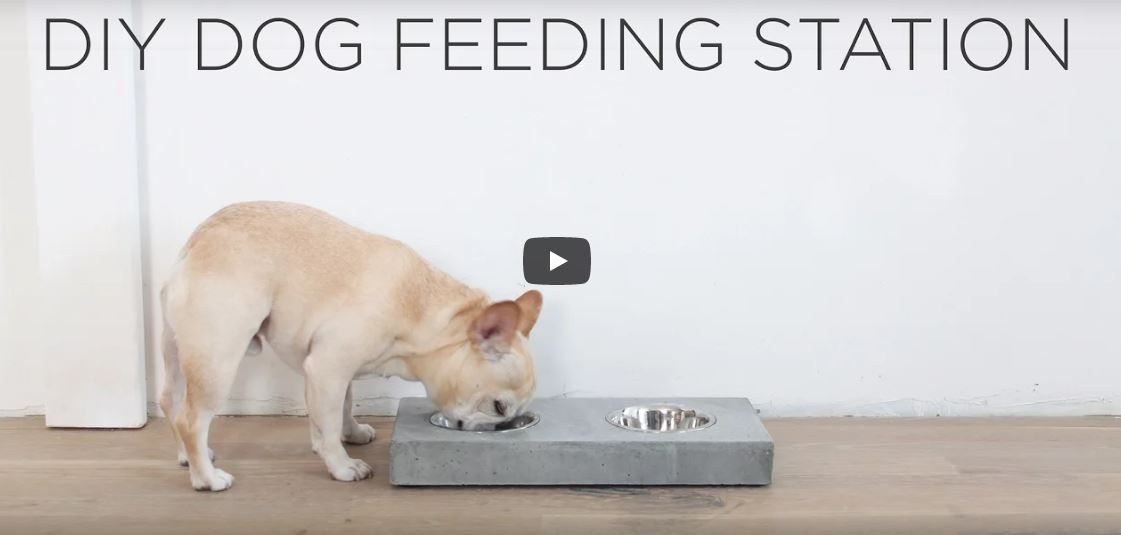 Pin By Quikrete On Concrete Life Hacks With Images Dog Feeding