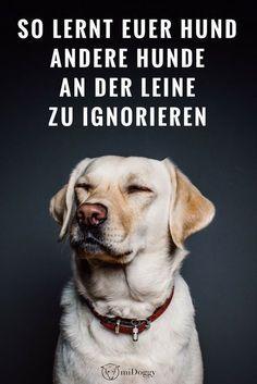 Wie Lernt Mein Hund Andere Hunde Zu Ignorieren Mit Leine Hunde