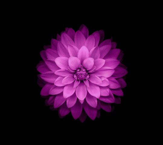 Flower ...   ....Purple, Indigo, Violet, Lavander, Lilac and Mauve ...