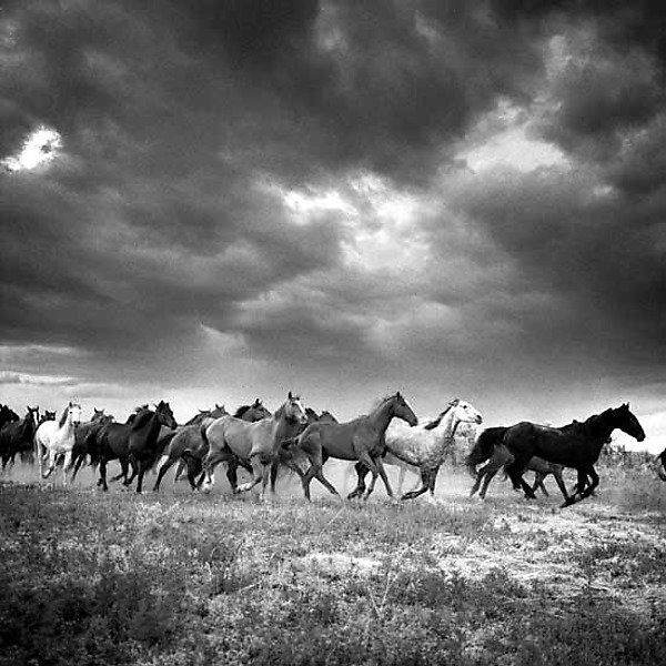 Black & White Photograph - A pigment print of an original black and white photograph. Signed and numbered on border of photograph. Limited edition of 100.