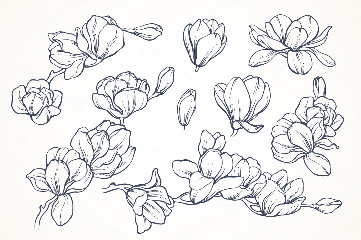 Linear Vector Magnolia Flowers Set By Color And Decor On