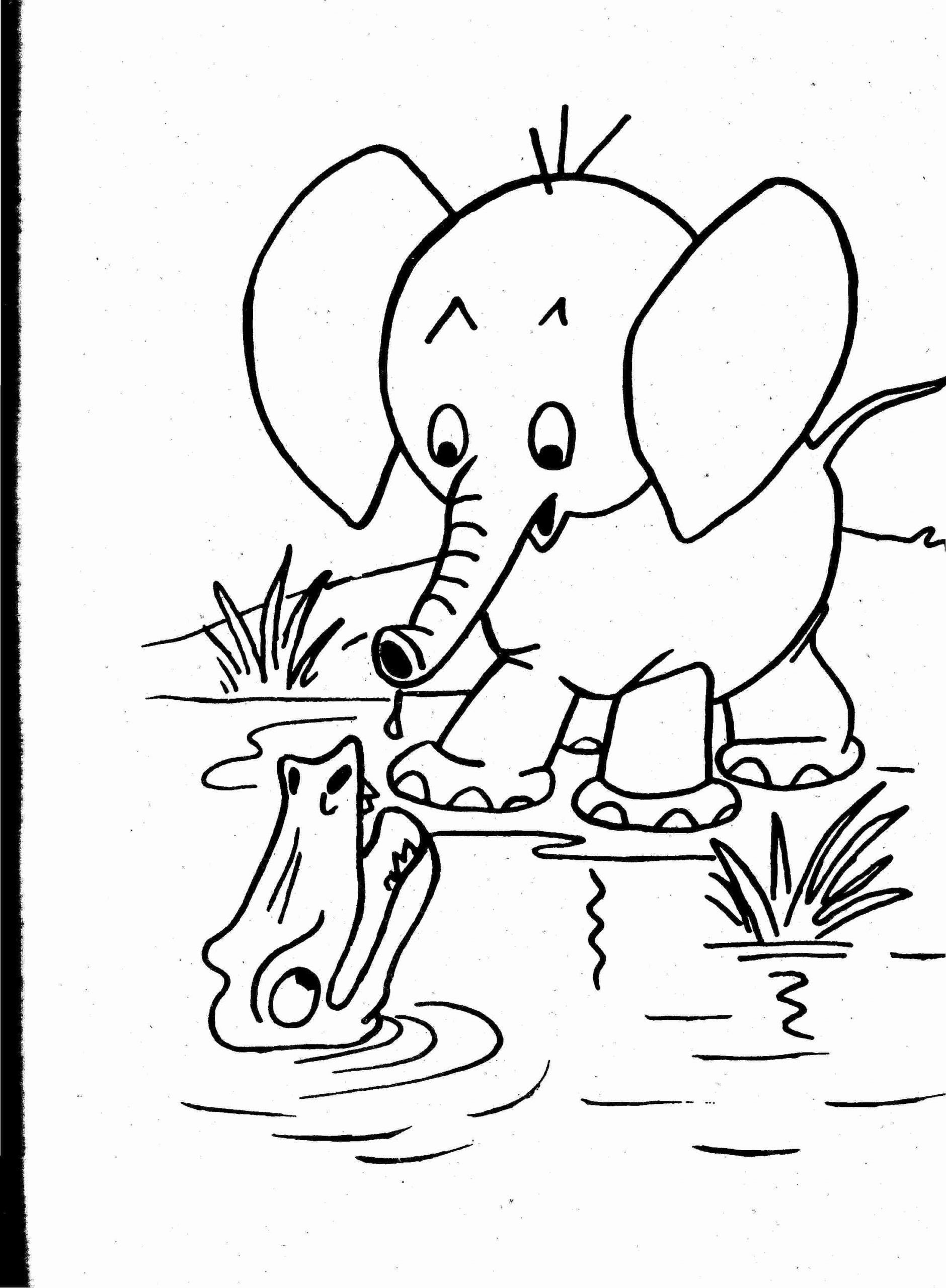 Nocturnal Animals Coloring Pages Luxury Printable