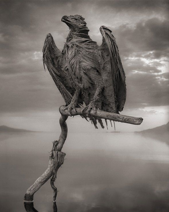 When animals die in Lake Natron they are turned into calcified statues because of the high concentration of salt