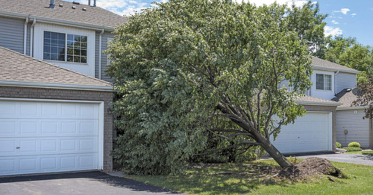 Storm Cleaning Can Turn Into A Real Peril Garden