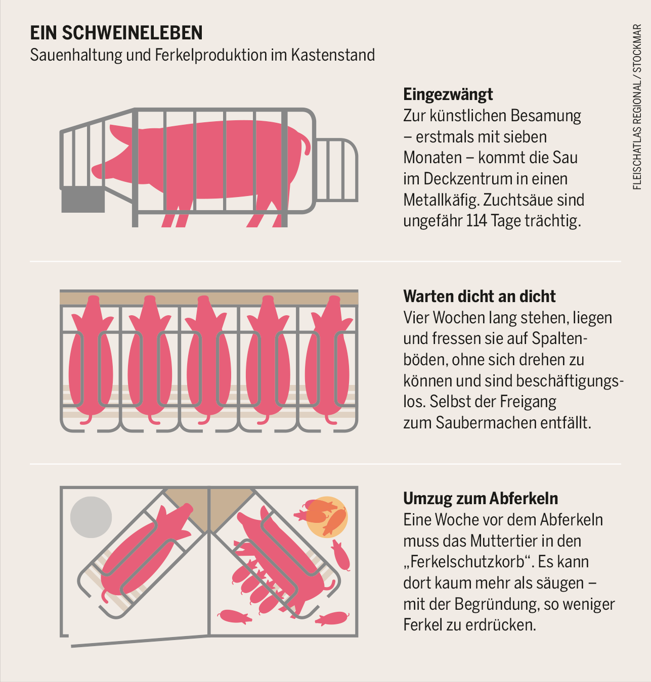 Ein Schweineleben Sauenhaltung Und Ferkelproduktion Im Kastenstand Tiere In Not Leben Massentierhaltung