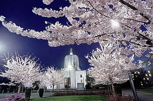 Panoramio Photo Of Oregon State Capitol With Cherry Blossoms Oregon Oregon Landscape Oregon Travel