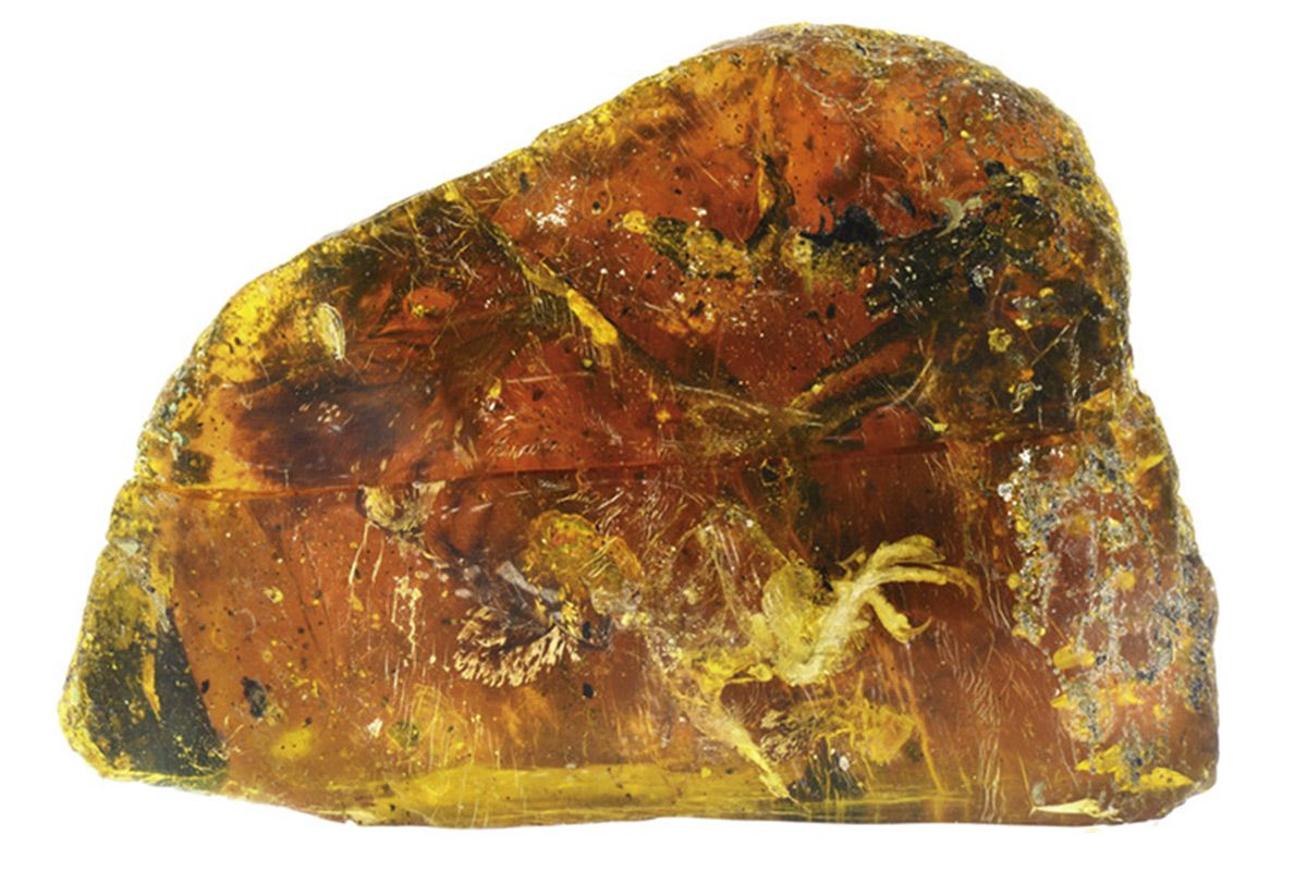 Bird caught in amber 100 million years ago is best ever