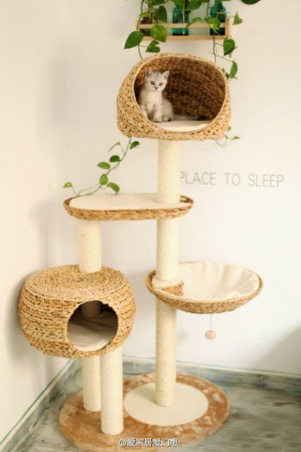 Fancy Not Only Yourself Your Cat Also Need A Nice Place To