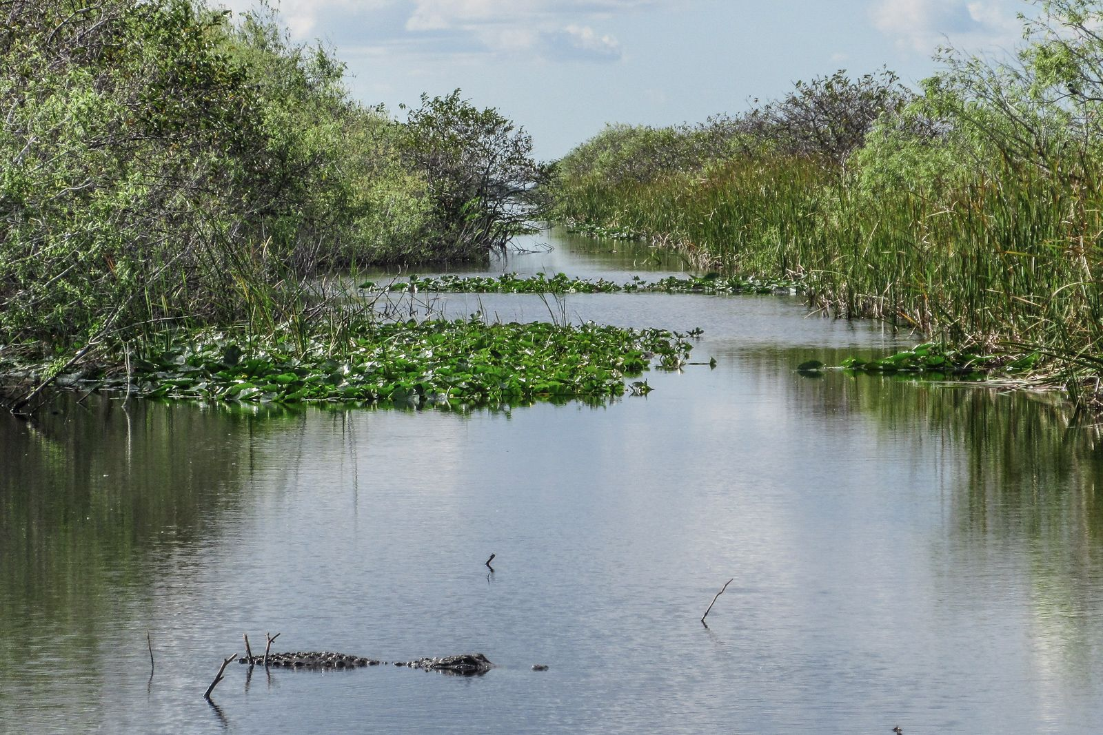 How to visit the Florida Everglades by Airboat