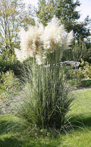 auffällige beetgestalten: solitärgräser | pflanzenfreude | pinterest, Design ideen