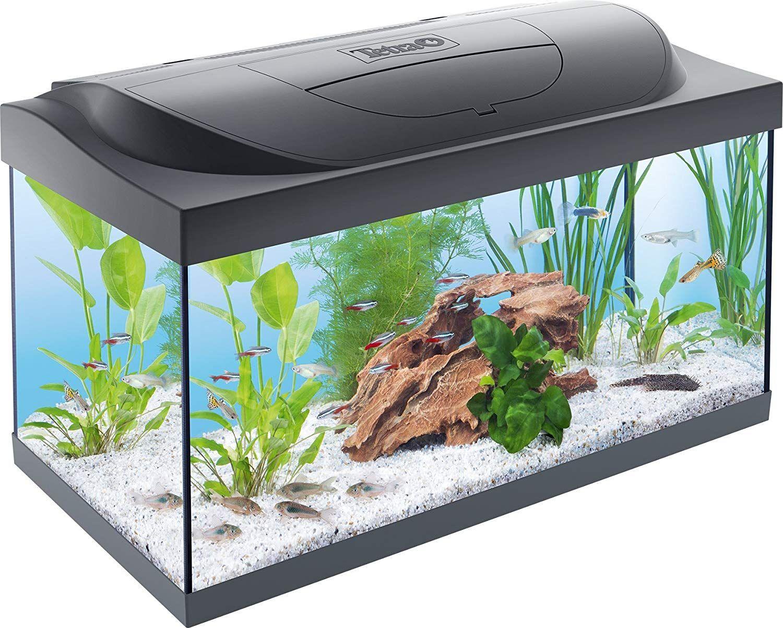 Tetra Starter Line Aquarium Complete Set With Led Lighting Stable Beginner S Pool With Technique Food And Care Pro Saltwater Aquarium Setup Aquarium Fish Tank