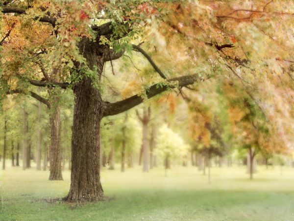 i want to sit and read under this tree!