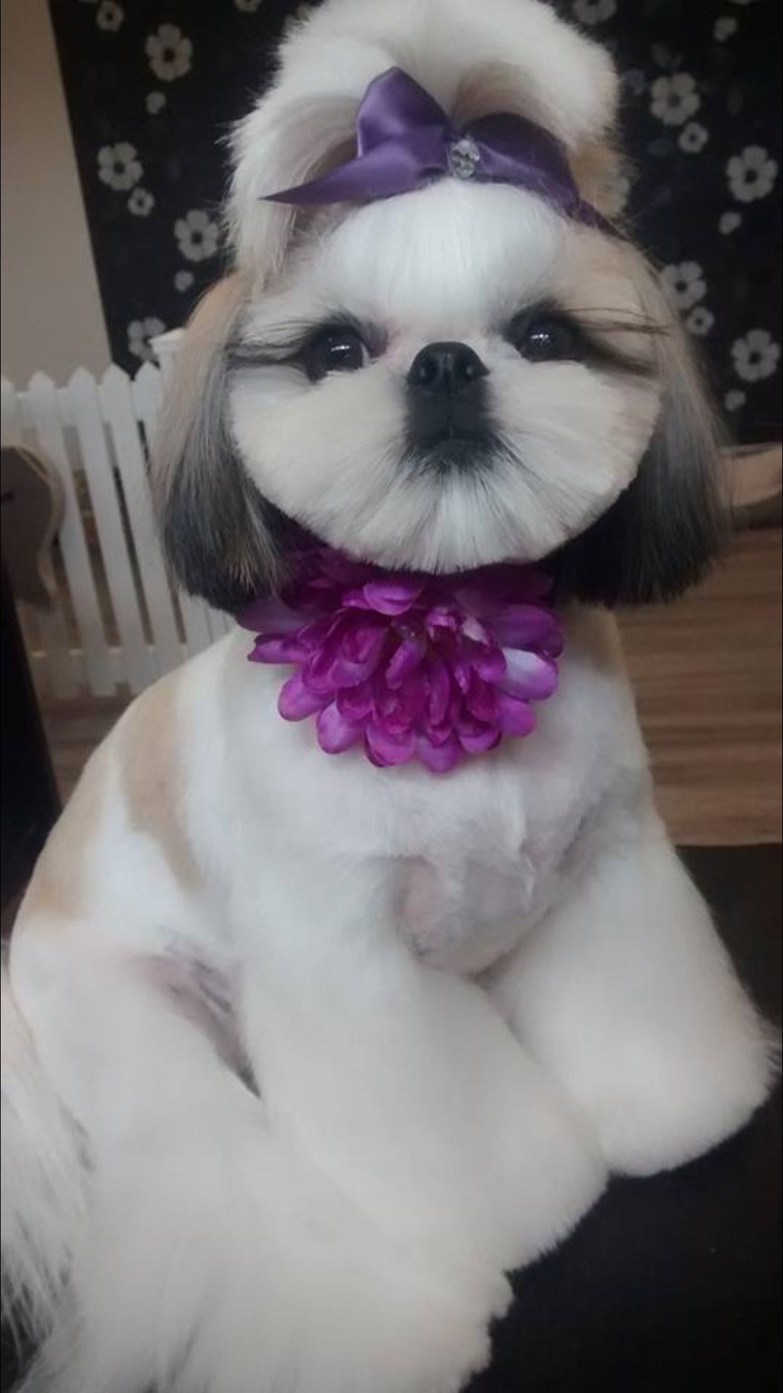Shih tzu haircut styles pin by kathyvantassell on animals  pinterest  dog grooming dogs