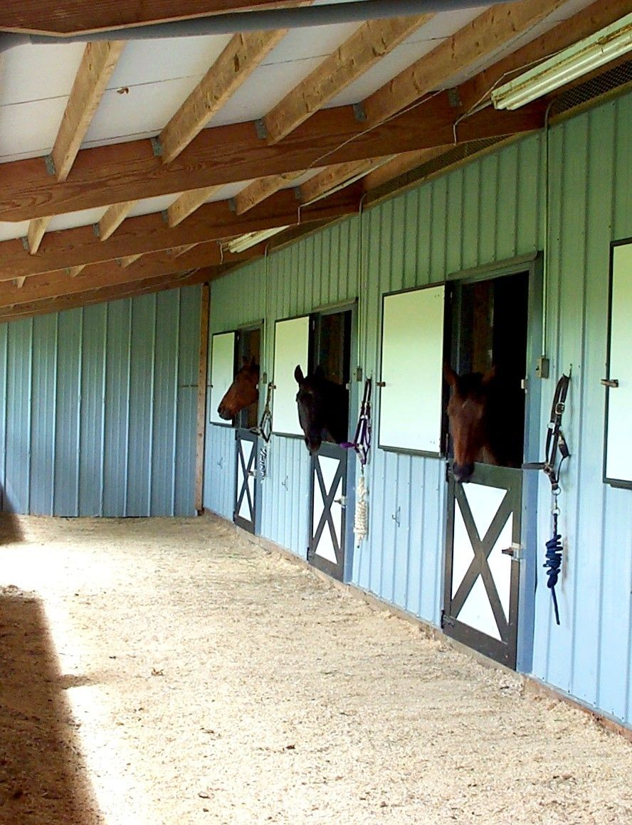 Horse Stables And Barns : I had never seen a horse close up before going to their