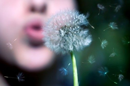 5 Tips For Managing Spring Allergies Claveles Diente De Leon