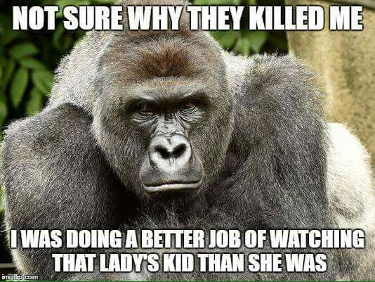 Funny Zoo Memes : So true and so sad as another innocent animal dies because of stupid