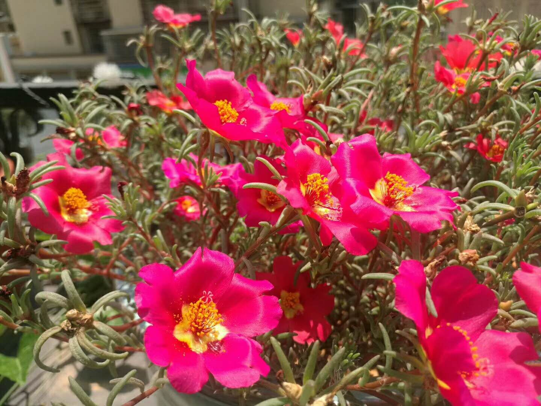 Tough beautiful flower.
