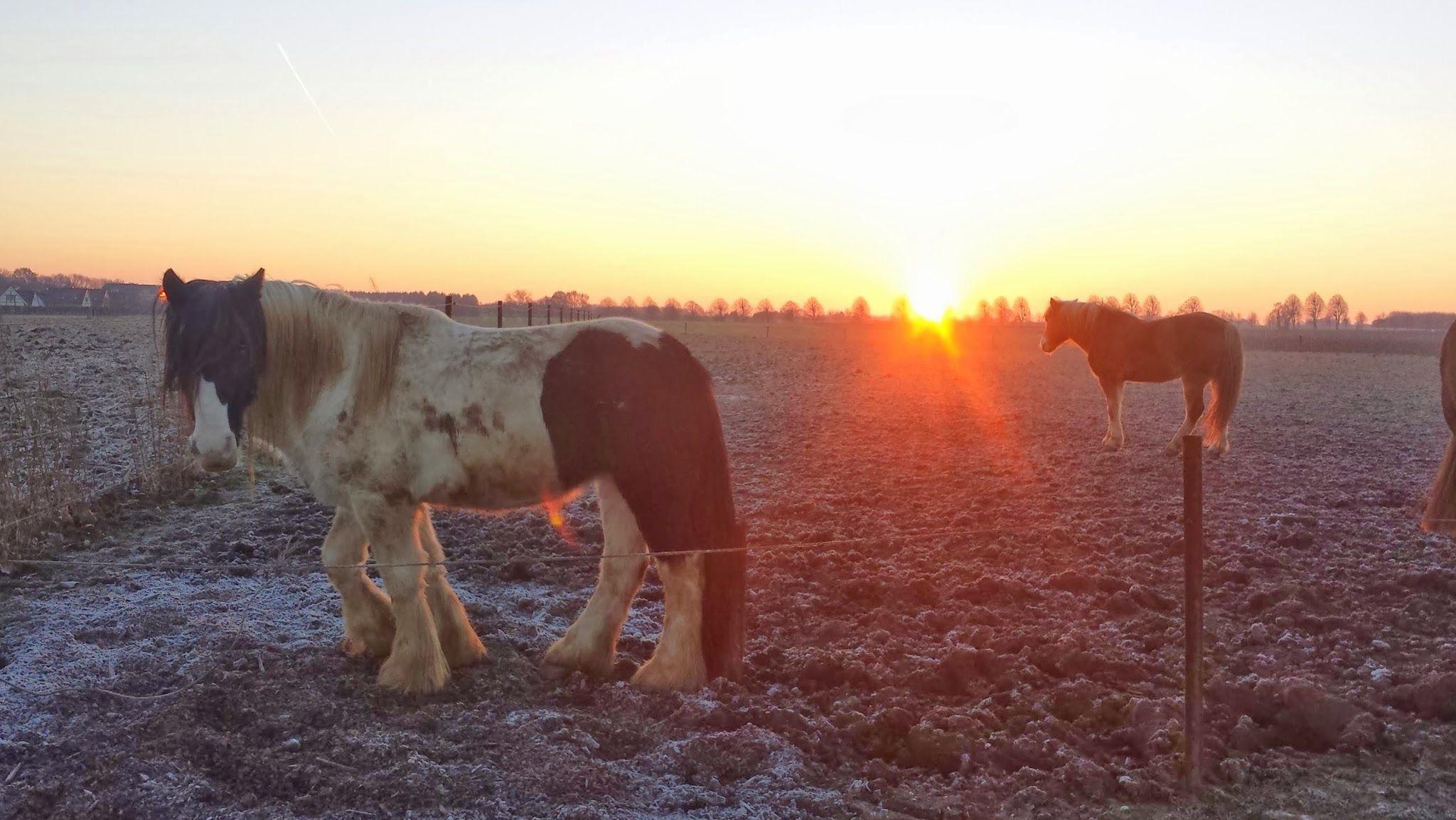 De wei is bevroren en de zon gaat onder.... Zenn.
