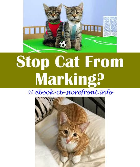 Staggering Tips Male Cat Not Neutered Spraying Cat Sprayed On My Bed Can A Cat Spray After Being Spayed Can A Cat Spray After Being Spay Toxoplasmosis Sensible