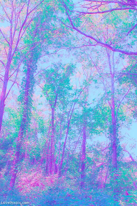 Nature's Art photography light nature sun trees forest sunlight colors effect