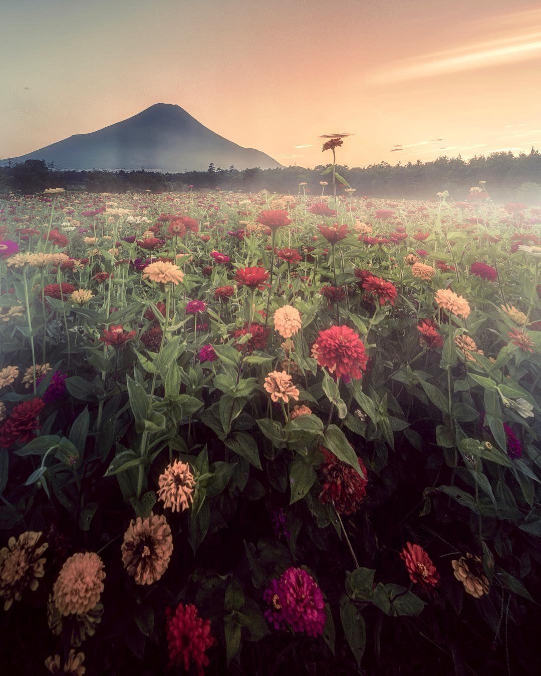 山中湖花の都公園 百日草 花火もいいけどそろそろネイチャー撮りたい ただどこ行こうとか全く決めてなくて行動できてない 今日も朝活行こうとしだのですがヤル気出ず どこいこう Location Beautiful Nature Nature Japan
