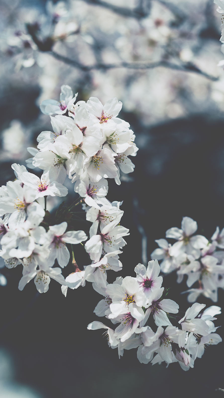 Spring Wallpapers for iPhone - Best Spring Backgrounds [Free Download]