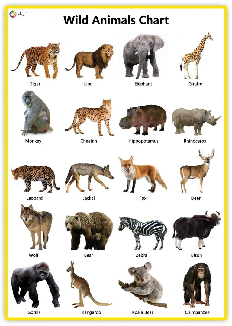 Wild Animals Facts Pictures Videos Chart Ira