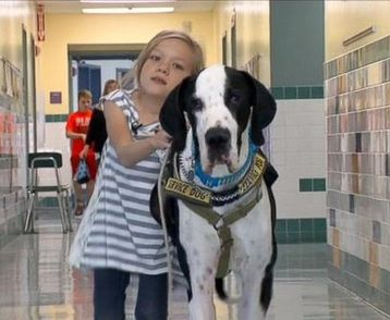 Great Dane Helps Little Girl With Rare Genetic Disorder Learn To