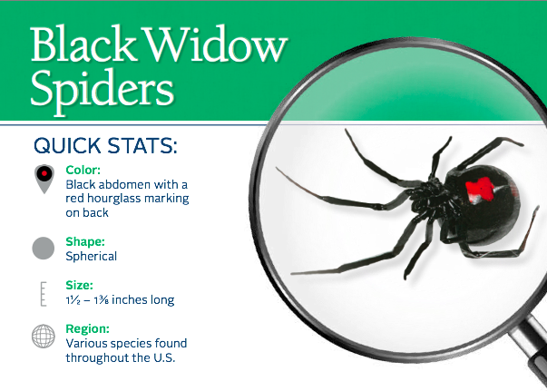 Pin By The National Pest Management A On Spiders Black Widow Spider Widow Spider Termite Control