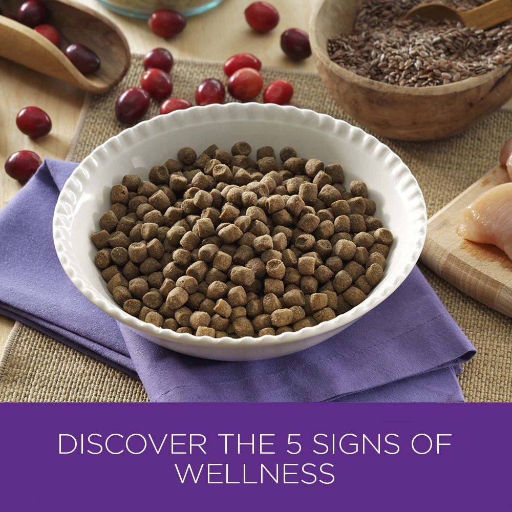 Wellness Complete Health Natural Dry Cat Food Kitten