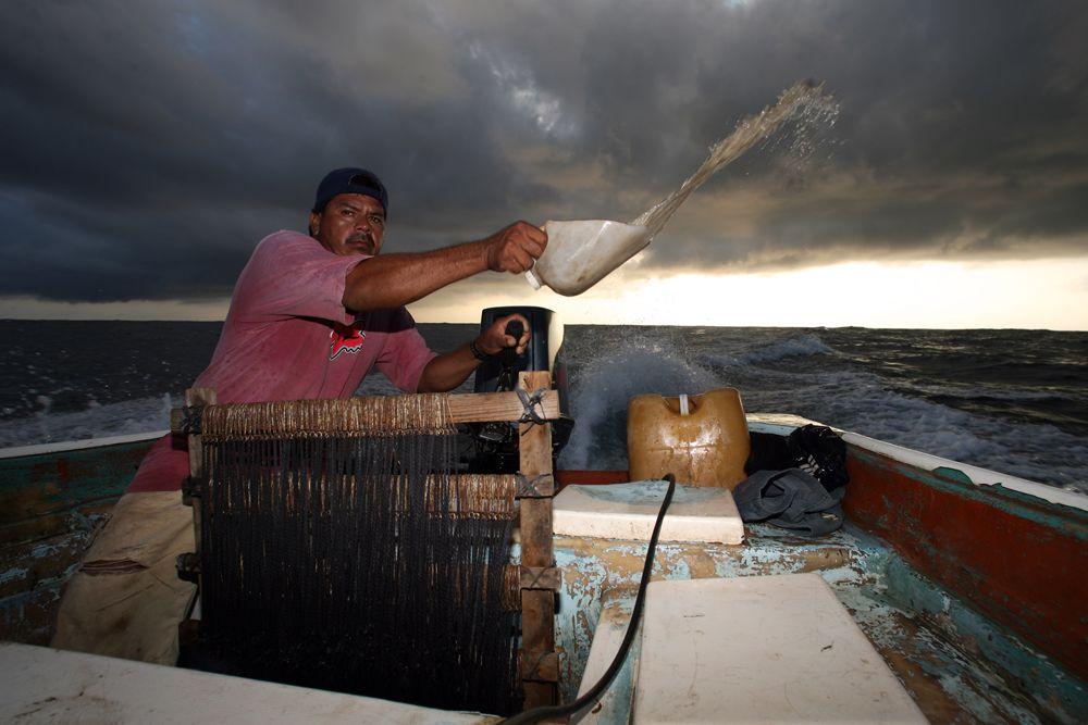 """Pesador de tiburón """"blanco"""" recreación de los Náufragos de San Blas. Nayarit México. fotografía. Pablo Salazar S."""