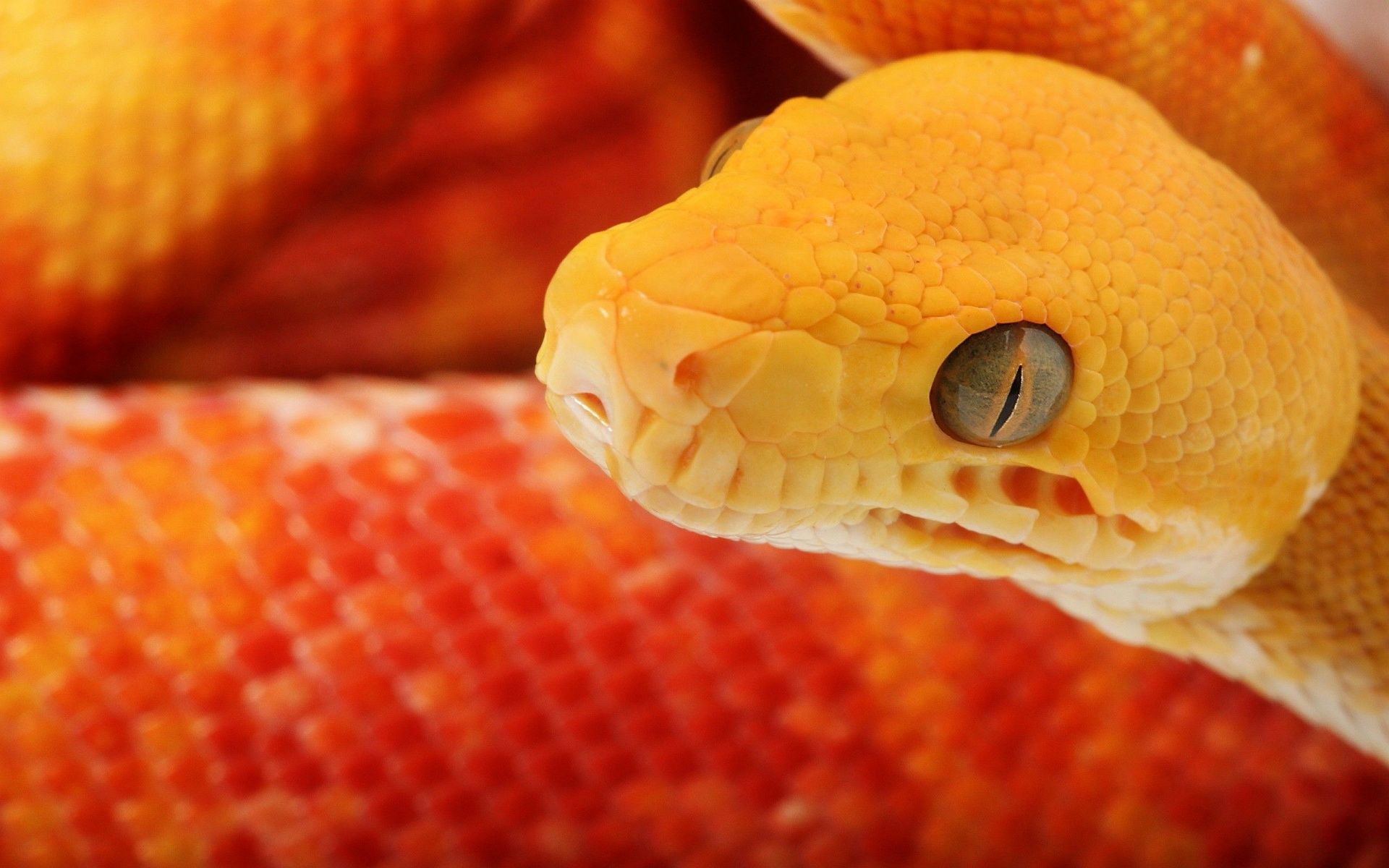 IPhone Snake Wallpapers HD Desktop Backgrounds x (con ...