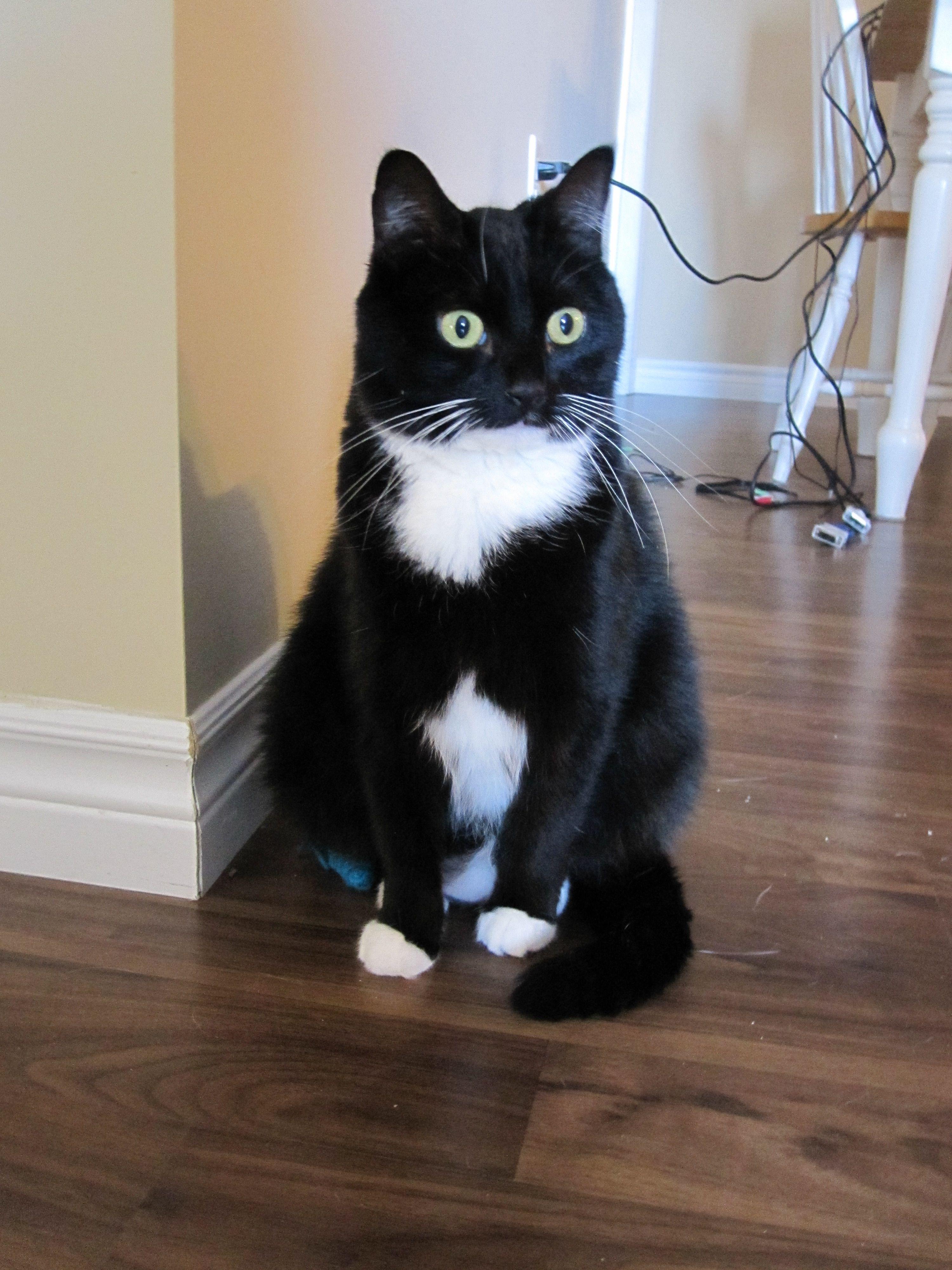 ramzan kadyrov cat