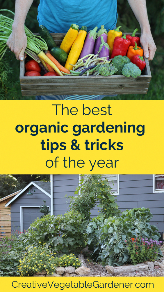 Photo of The Best Organic Gardening Tips and Tricks of the Year – Creative Vegetable Gardener
