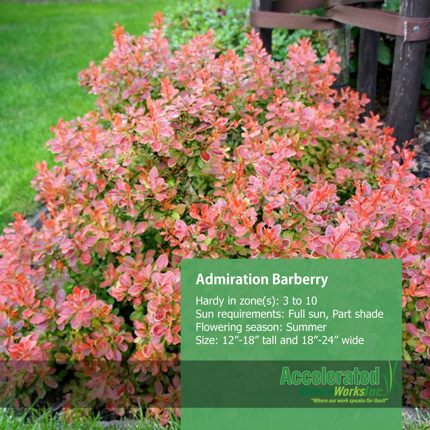 Admiration Barberry Anese Garden Shrubs Yahoo Images Outdoor Ideas Image Search
