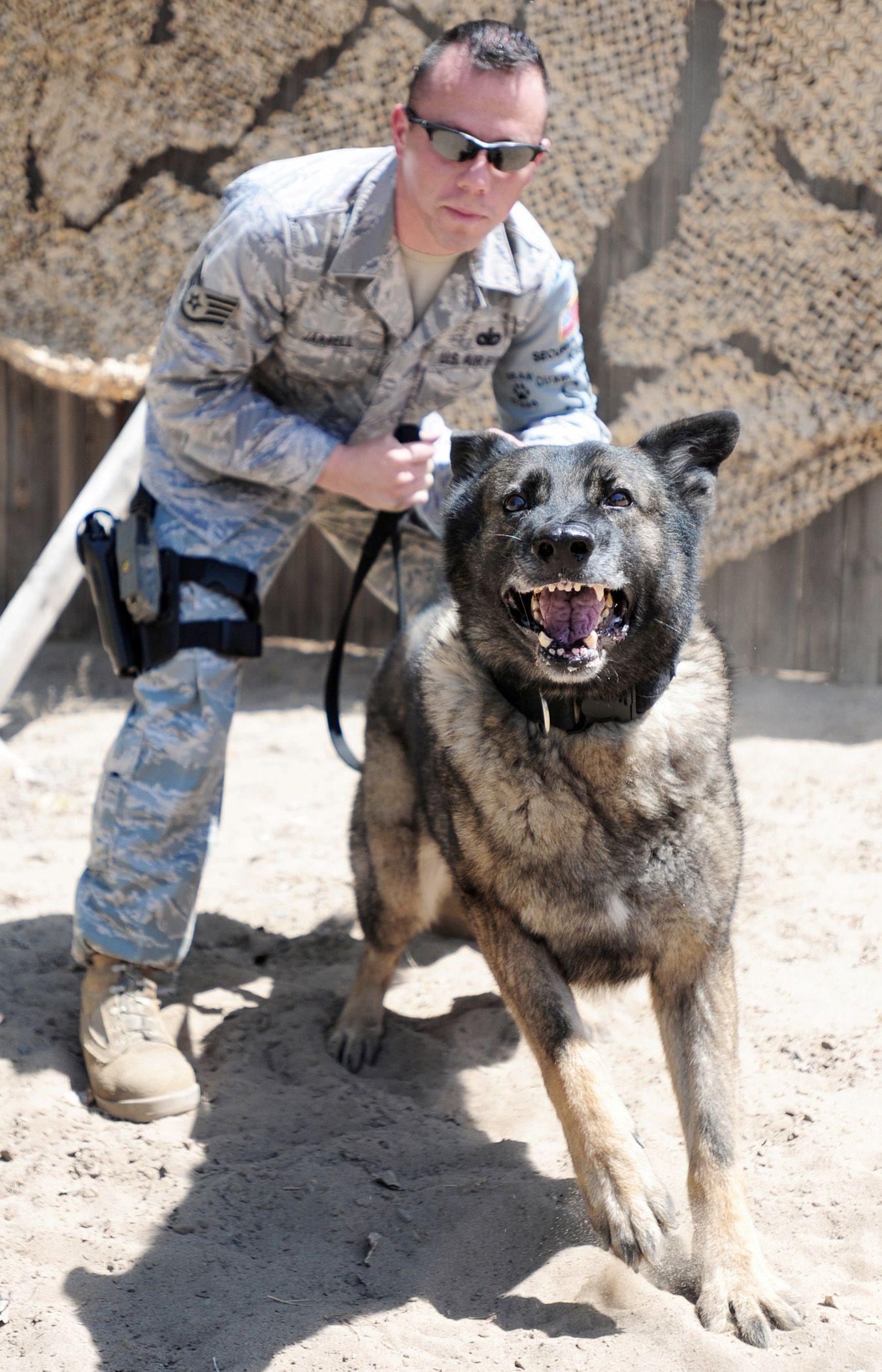 Sgt Jarrel And Uran Of Usaf Security Forces War Dogs Military