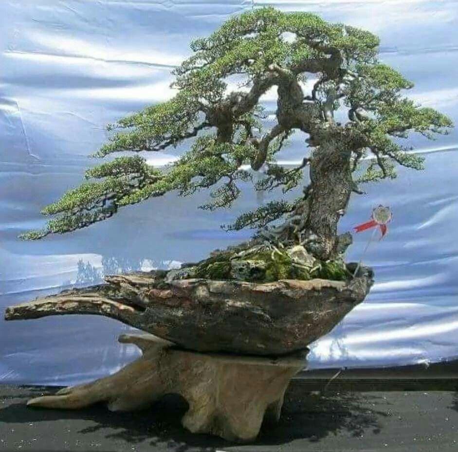 Alberi Nani Da Giardino pin di paolo trevisanato su bonsai e acquari | natura